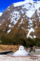 A tiny snowman on the side of the Milford Sound Rd, New Zealand