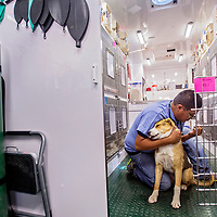 060413       Cable Hoover<br /> <br /> Veterinary technician Thurman Lynch preps a dog called Missy for surgery inside the Navajo Nation Veterinary Mobile Unit in Shiprock Tuesday.