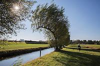 Kunstwerk Gebogen Bomen William Forsythe Groningen