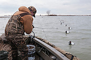 Canvasback Hunting, Aythya valisineria, Lake St. Clair, Ontario, Canada