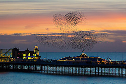 © Licensed to London News Pictures. 15/01/2016. Brighton, UK. Starlings murmuring over Brighton Pier at sunset. Today January 15th 2016. Photo credit: Hugo Michiels/LNP