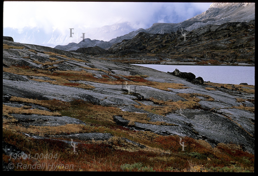 Colorful autumn tundra accents smooth granite outcrops and glacial tarn in late August; Tasiusaq Bay, western Greenland