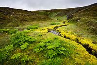Lækur og Dýjamosi inn á Kringilsárrana. Um 25% lands Kringilsárrana mun fara undir fyrirhugað Hálslón. Þar á meðal er þessi staður.