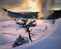 Mammoth Hot Springs in Winter, Yellowstone National Park Wyoming