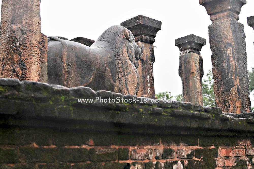 Sri Lanka, Polonnaruwa, UNESCO world heritage site. Carved stone lion statue on the steps of the royal palace
