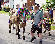 Each cow descending into Buching September 15 sported her own floral headdress and required her own accompanist. Single-file poses a challenge for herd animals (and for herders, too).