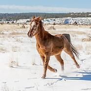 HORSES RUNNING IN SNOW