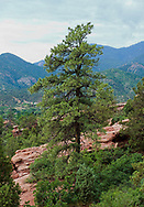 Colorado Springs; Colorado; Garden of the Gods