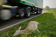Lorry drives past corpse of dead deer by roadside on country road, Charlbury, Oxfordshire, United Kingdom