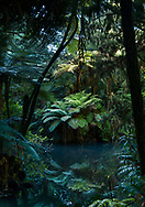Deep in the New Zealand jungle of Pukekura Park, New Plymouth, tree ferns and forest reflect in still water.