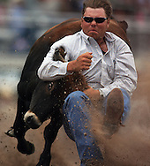 Bull Dogger Ross Eickogg grabs the calf during the Steer Wrestling Competition, 25 Jul 2007, Cheyenne Frontier Days