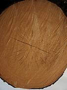 Querschnitt durch Tannenholz, Hokzklotz, Holzschlag, Holztremel, Jahresringe. Découpe d'un bout de bois de sapin en tronc. © Romano P. Riedo