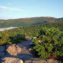 Acadia NP, ME. Pitch Pine, Pinus rigida, from The Beehive.  Cadillac Mtn.& Dorr Mtn.