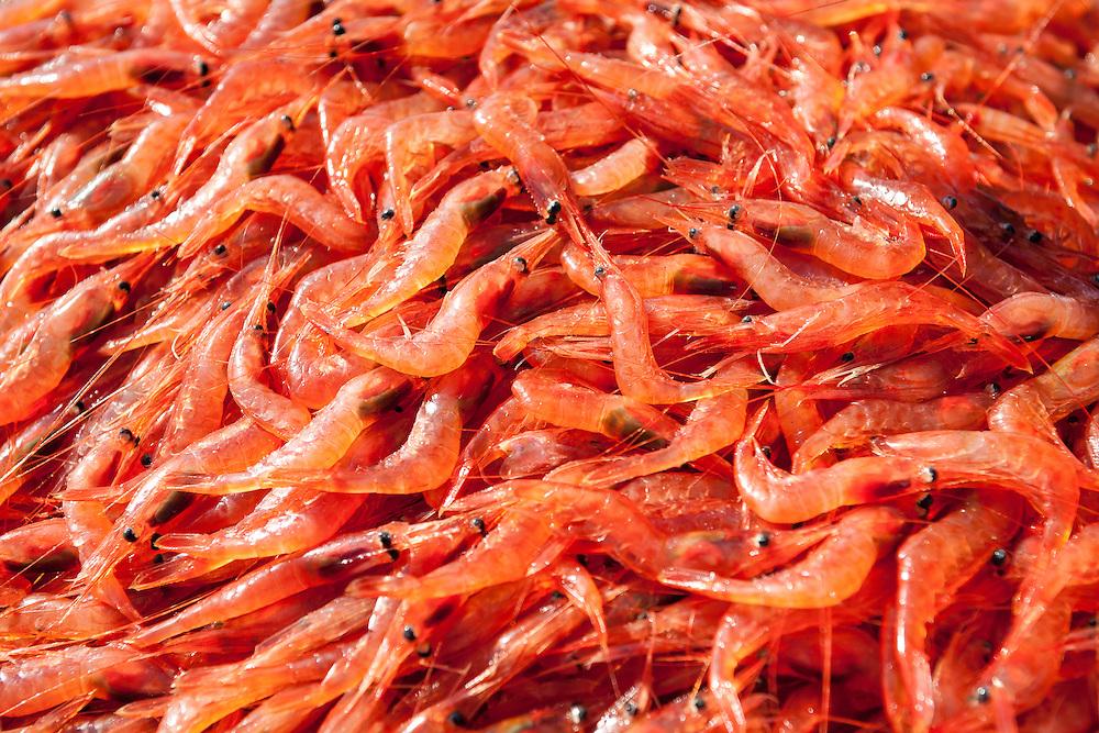 Wild and Sustainably Caught Oregon Pink Shrimp (Pandalus Jordani) | August 25, 2008