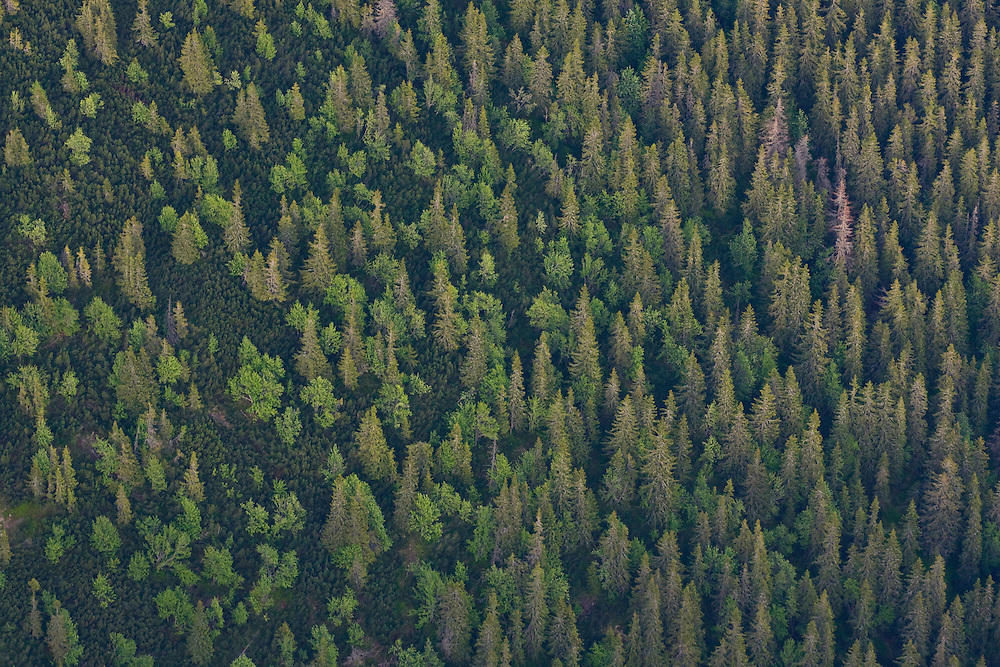 Aerial view of border between mountain forest with Spruce (Picea abies) and Ash (Sorbus aucuparia) and Dwarf pine (Pinus mugo) zone. Western Tatras, Slovakia. June 2009. Mission: Ticha