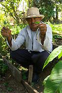 Marco de la Torre holding coffee seedlings; Orongo, Pichincha Province, Ecuador