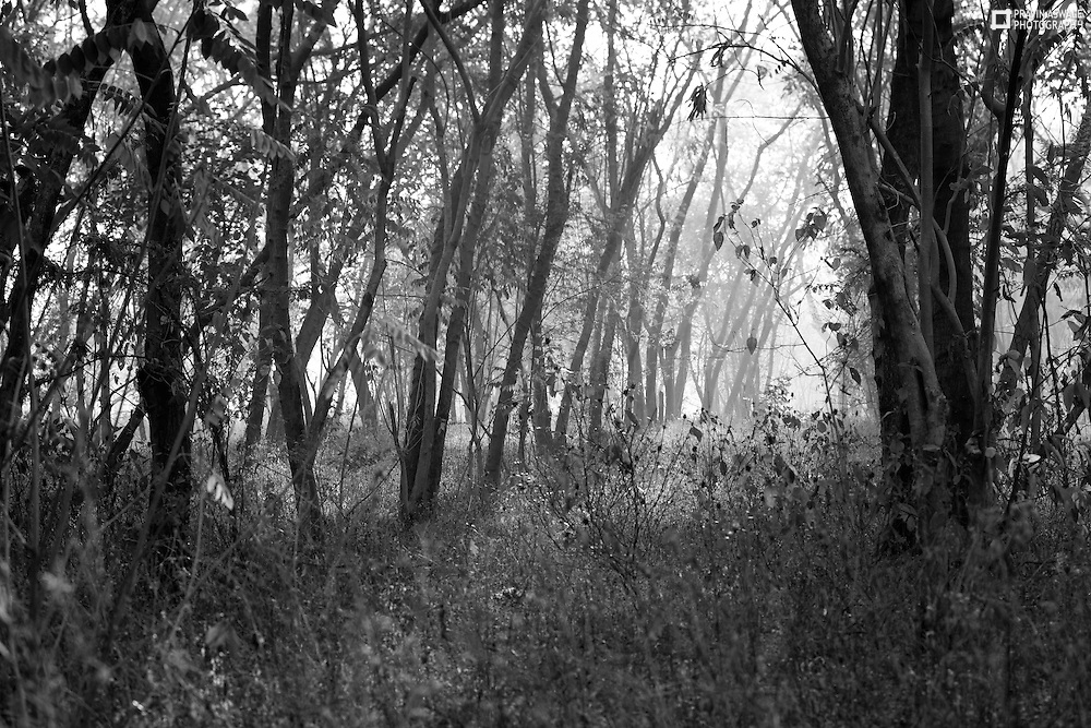 THE BEAUTIFUL MORNING LIGHT ALONG WITH THE TREES, THE FOG ENHANSING THE SENSE OF DEPTH.