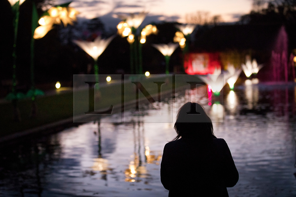 © Licensed to London News Pictures. 30/11/2017. London, UK. A visitor admires the illuminated snowdrops on the Jellicoe Canal at RHS Wisley Gardens. Trees and plants are illuminated at Royal Horticulture Society Wisley Gardens for the Christmas Glow. Hundreds of different lights can be seen when following the trail throughout the gardens opening 1 December 2017 – 3 January 2018. Photo credit: Peter Macdiarmid/LNP
