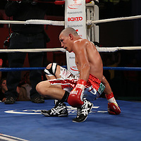 "Guillermo ""El Borrego"" Avila  gets up after a knockdown in his fight for the WBO Latin Featherweight title during the ""Boxeo Telemundo"" boxing match between at the Kissimmee Civic Center on Friday, March 14, 2014 in Kissimmme, Florida.  Jonathan Oquendo won the fight by unanimous decision. (AP Photo/Alex Menendez)"