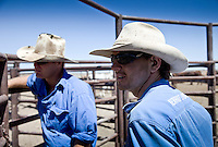 Brunette Downs Cattle Station is situated on the Barkley tablelands in Australia's Northern Territory. One of Australia's largest cattle stations..Sam Burke son of station mananger Henry in the drafting yards,