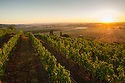 Yamhill Valley Vineyards, McMinville, Willamette Valley, Oregon