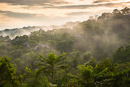 Exploring the Rainforest of the Amazone region of Brazil