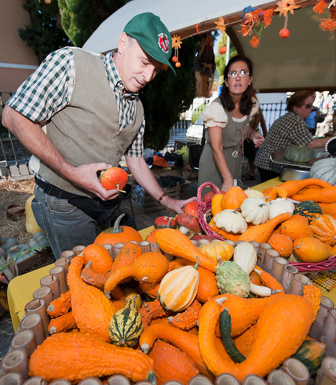 BRESCIA, ITALY - SEPTEMBER 12:  One of the organiser checks the decorative pumpkins at this year competition at  Sale Marasino organised by the Club Maspiano on September 12, 2010 in Brescia, Italy.  Cutrupi Stefano of Radda in Chianti, won  this year Italian National Competition with his pumpkin weighing  507 Kg.