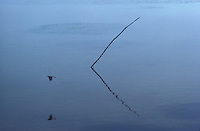 reflection of a stick in still water - photograph by owen Franken
