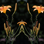 Photographic series of digital computer art from an image of colorul flora.<br /> <br /> Two or more layers were used to enhance, alter, manipulate the image, creating an abstract surrealistic mirrored symmetry.