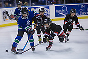 KELOWNA, CANADA - FEBRUARY 20:  Mini Minor at the Kelowna Rockets game on February 20, 2018 at Prospera Place in Kelowna, British Columbia, Canada.  (Photo By Cindy Rogers/Nyasa Photography,  *** Local Caption ***