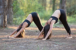 Women Practicing Yoga in a Forest, Downward facing dog Pose