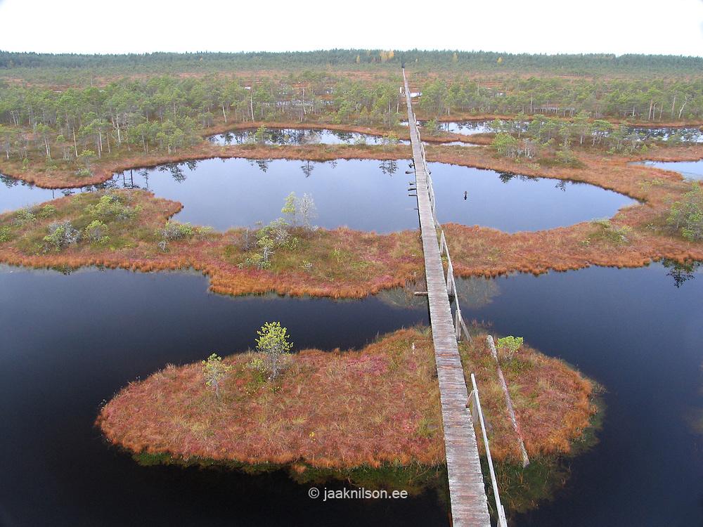 Männikjärve Bog, Endla Nature Reserve, Estonia, Europe