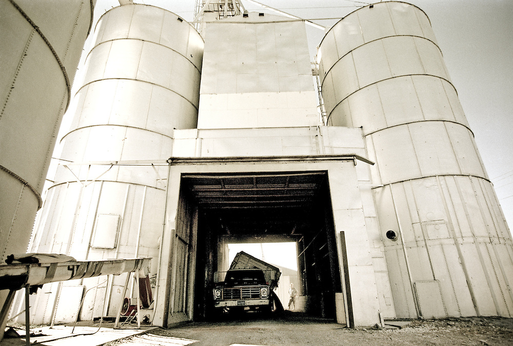 A farmer unloads a load of corn into a grain bin in eastern Colorado.