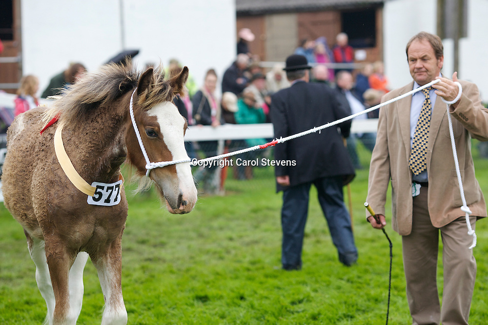 Best Shire Foal<br />