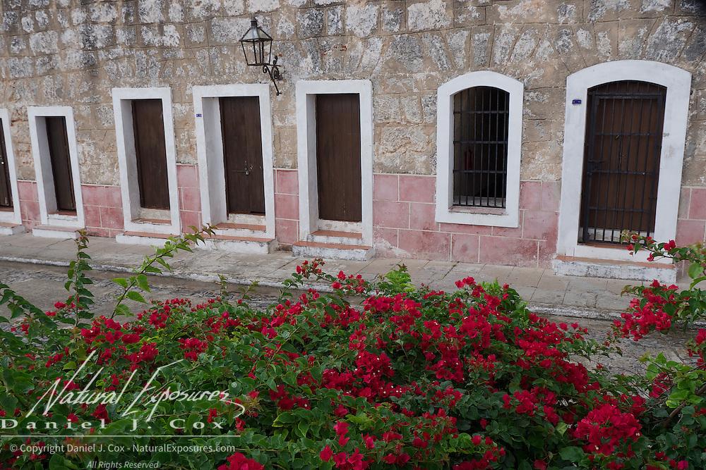 Beautiful red flowers along the walls of the ancient fort La Cabana, Havana, Cuba
