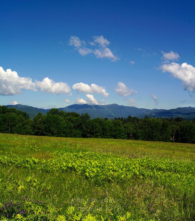 Summer pasture, Mt. Mansfield , Vermont from Stowe, Vermont