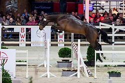 024, Rinus vd Bisschop<br /> BWP Hengstenkeuring -  Lier 2020<br /> © Hippo Foto - Dirk Caremans<br />  17/01/2020