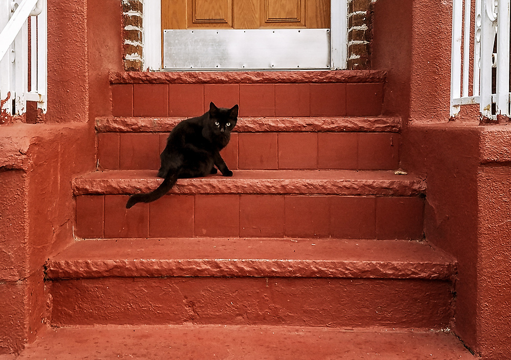 Green eyed black cat on front steps oh house. North Bergen, NJ 2017