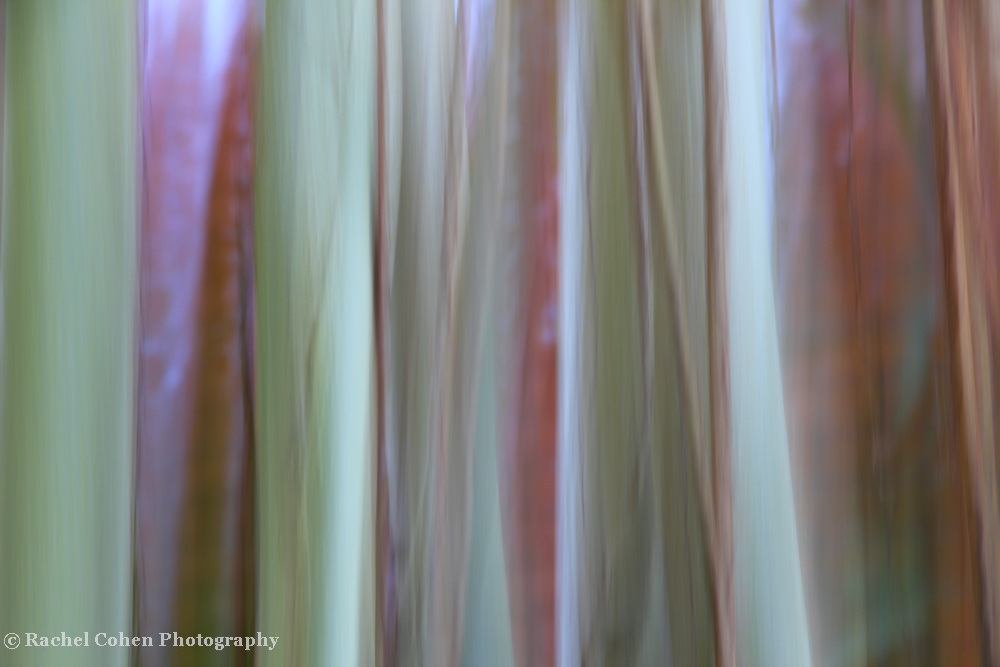 &quot;Among the Vines&quot;<br /> <br /> Light in color, yet strong in form. A beautiful abstract vine image!!<br /> <br /> Nature Abstracts by Rachel Cohen