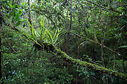 Ephiphytes and moss growing in Ranomafana National Park.