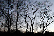 ' Dancing trees in Prospect Park '