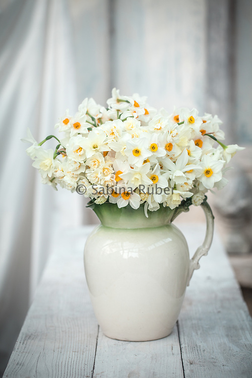 Scented Narcissi in large antique jug