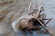 Ocqueoc River driftwood, Presque Isle County, Michigan