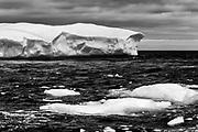 Bird photography and Icebergs NL Canada