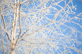Snow - Snø - Frost