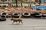 May 19 - BANGKOK, THAILAND: A stray dog runs up Rama IV Road opposite Lumpini Park during the Thai government crack down against Red Shirt and anti government protesters. The Royal Thai Army attacked anti-government protesters May 19 with troops and armored personnel carriers. Photo by Jack Kurtz