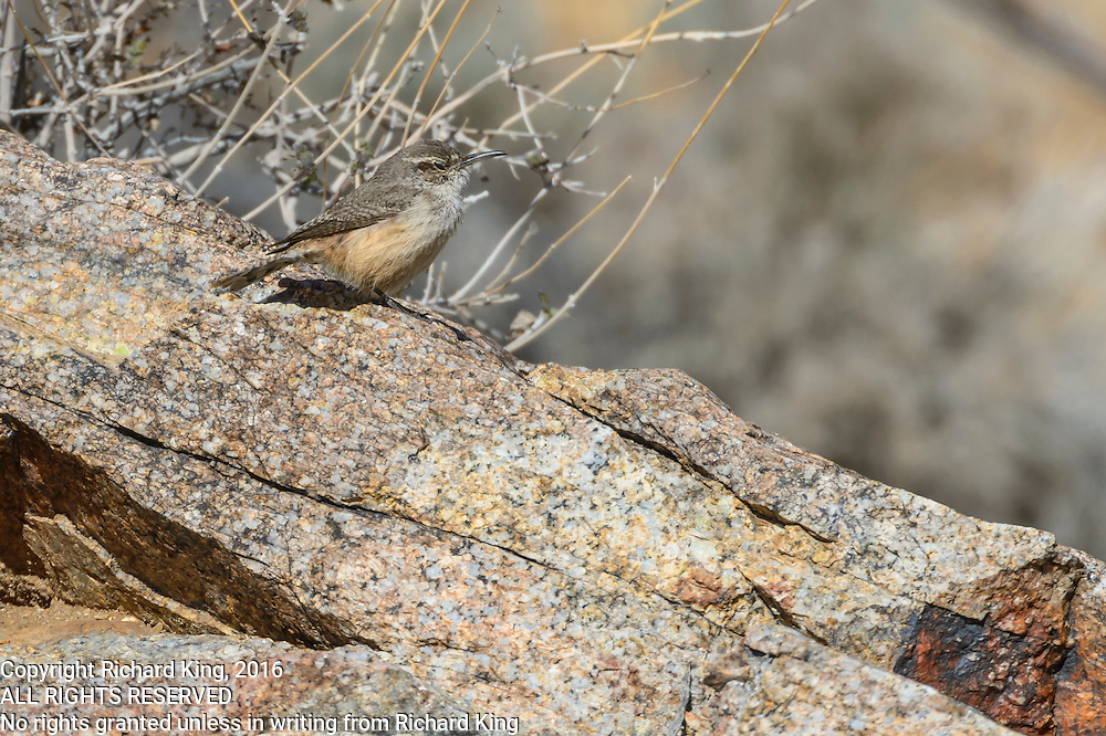 Birding images Wrens and Jays