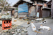 Aoshima, Ehime prefecture, September 4 2015 - Cats on the streets neat the harbour.<br /> Aoshima (Ao island) is one of the several « cat islands » in Japan. Due to the decreasing of its poluation, the island now host about 6 times more cats than residents.