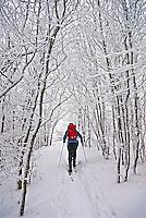 Nicole Hiegl cross country skiing on the Appalachian Trail, Hump Mountain, Roan Mountain Massif, North Carolina. Innaguration Day, January 20, 2009.