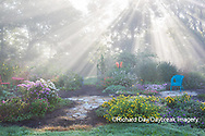 63821-23702 Sun rays in fog in flower garden, Marion Co., IL
